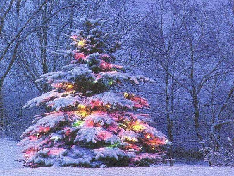 christmas tree outside - Outside Christmas Trees